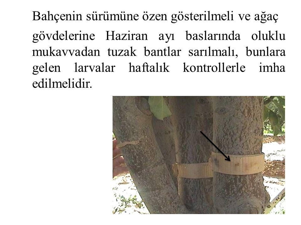 Bahçenin sürümüne özen gösterilmeli ve ağaç gövdelerine Haziran ayı baslarında oluklu mukavvadan tuzak bantlar sarılmalı, bunlara gelen larvalar haftalık kontrollerle imha edilmelidir.