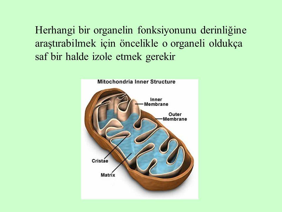 Herhangi bir organelin fonksiyonunu derinliğine araştırabilmek için öncelikle o organeli oldukça saf bir halde izole etmek gerekir