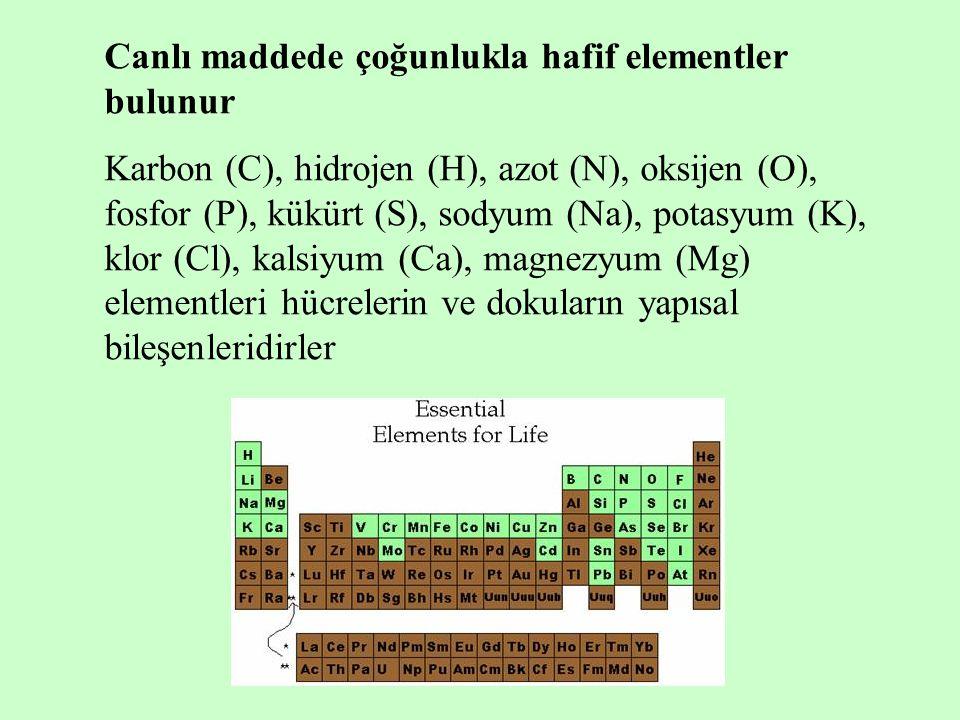 Canlı maddede çoğunlukla hafif elementler bulunur