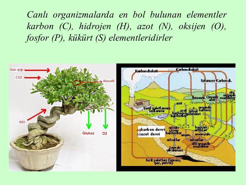 Canlı organizmalarda en bol bulunan elementler karbon (C), hidrojen (H), azot (N), oksijen (O), fosfor (P), kükürt (S) elementleridirler
