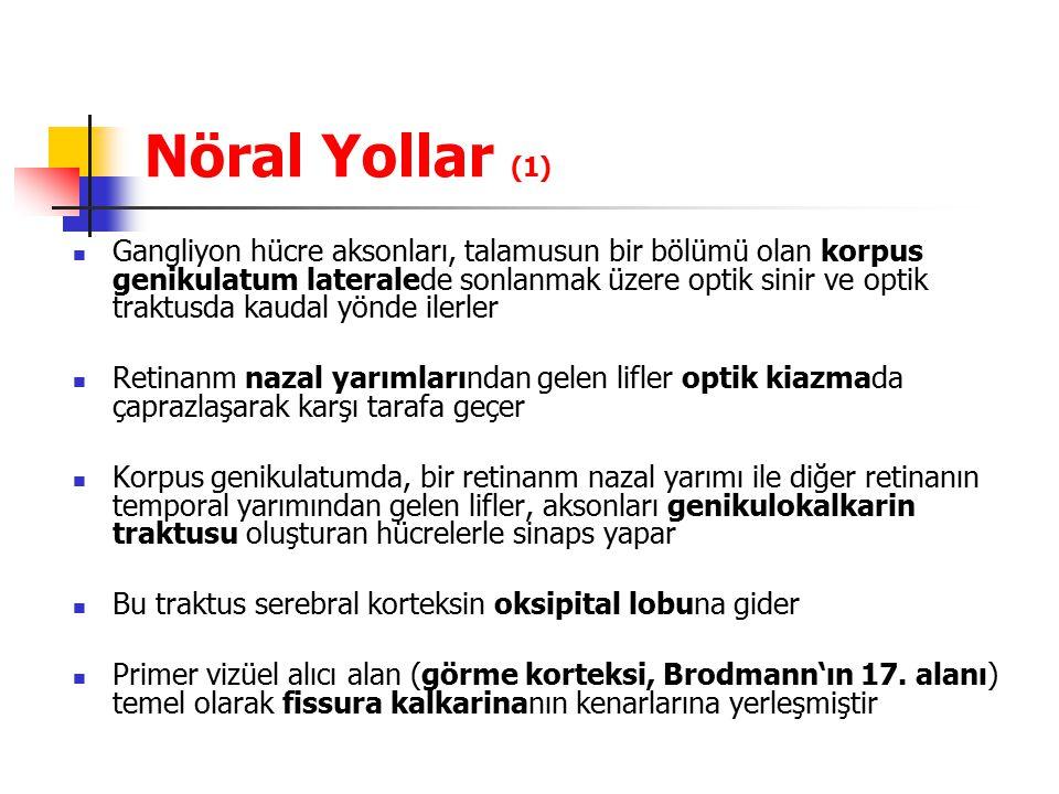 Nöral Yollar (1)