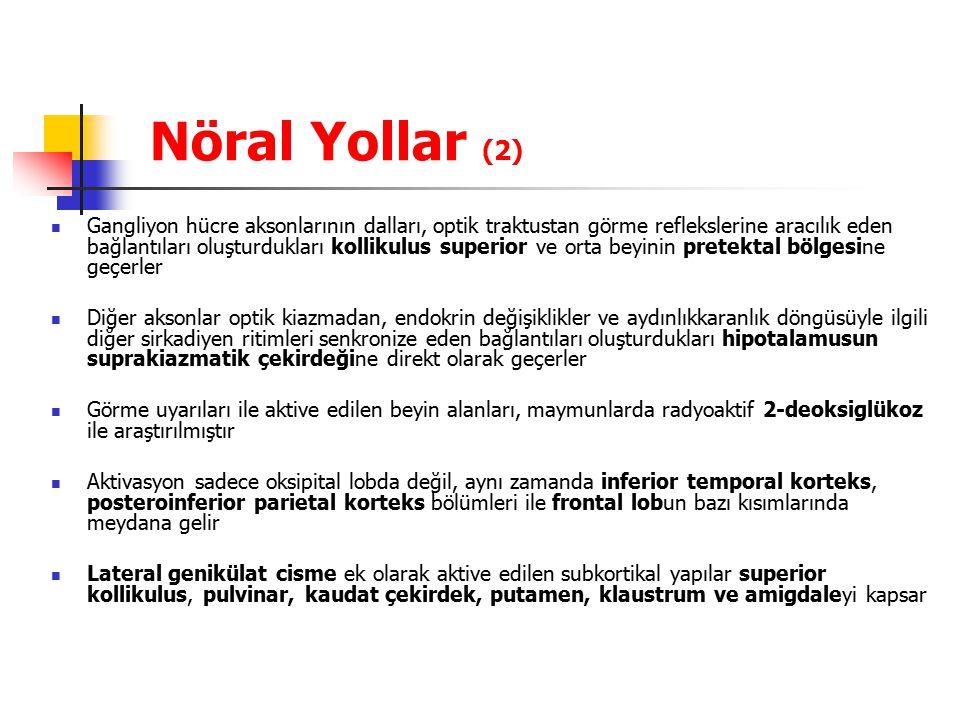Nöral Yollar (2)