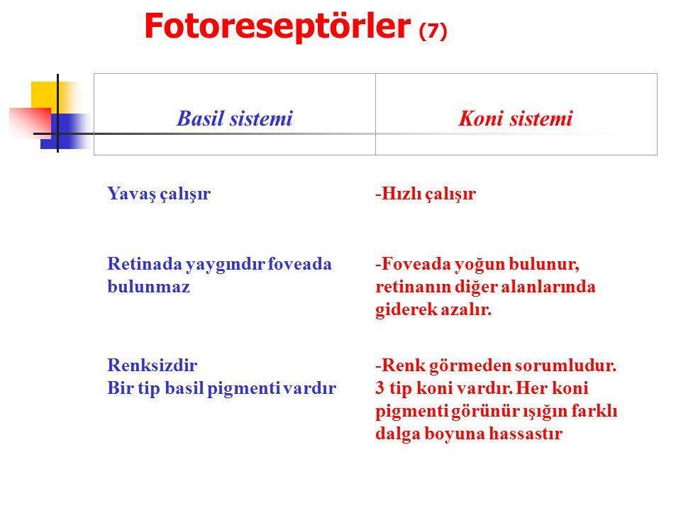 Fotoreseptörler (7) Basil sistemi Koni sistemi Yavaş çalışır