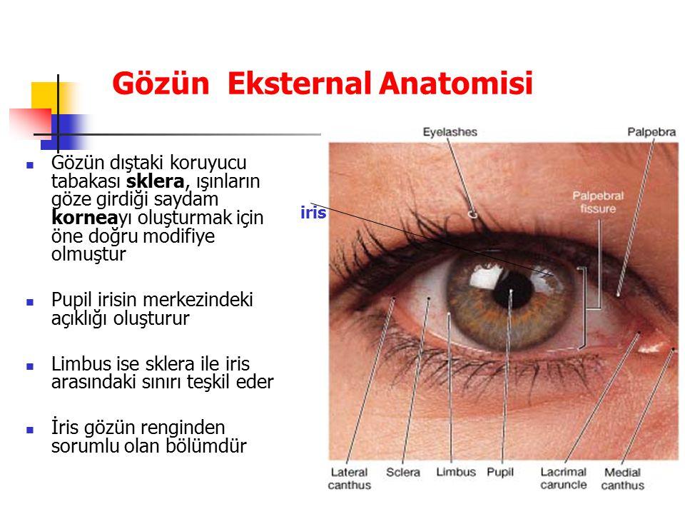 Gözün Eksternal Anatomisi