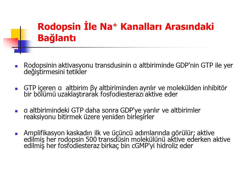 Rodopsin İle Na+ Kanalları Arasındaki Bağlantı