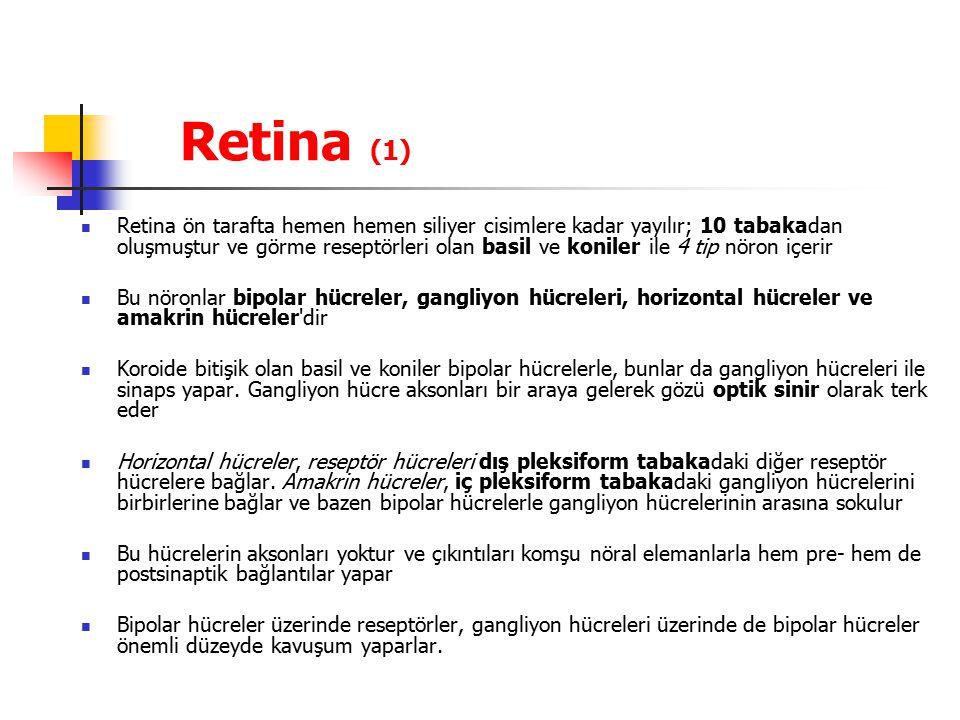 Retina (1)