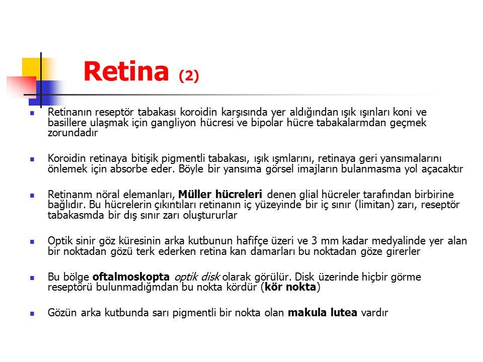 Retina (2)