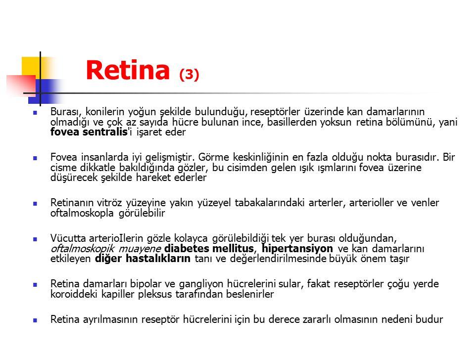 Retina (3)