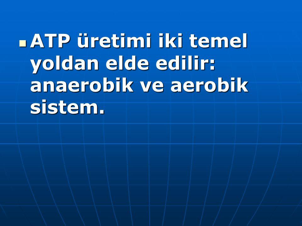 ATP üretimi iki temel yoldan elde edilir: anaerobik ve aerobik sistem.