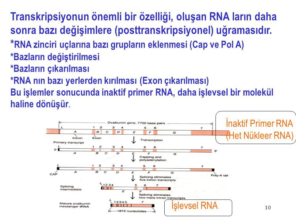 *RNA zinciri uçlarına bazı grupların eklenmesi (Cap ve Pol A)