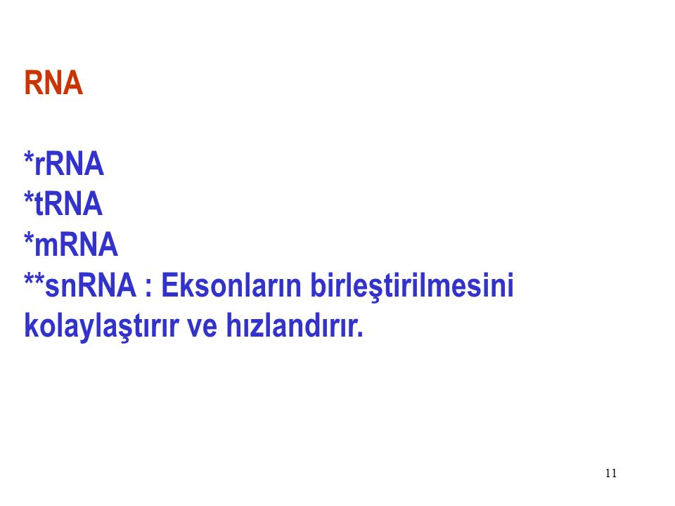 RNA *rRNA *tRNA *mRNA **snRNA : Eksonların birleştirilmesini kolaylaştırır ve hızlandırır.