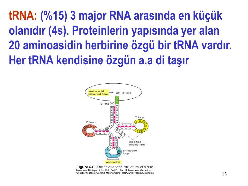 tRNA: (%15) 3 major RNA arasında en küçük olanıdır (4s)