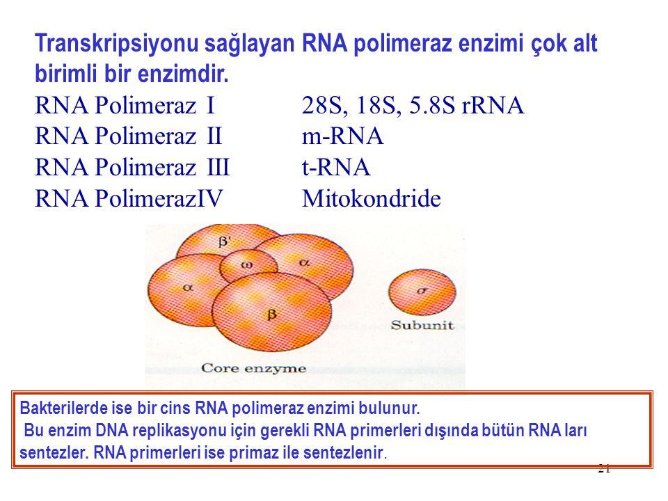 RNA Polimeraz I 28S, 18S, 5.8S rRNA RNA Polimeraz II m-RNA