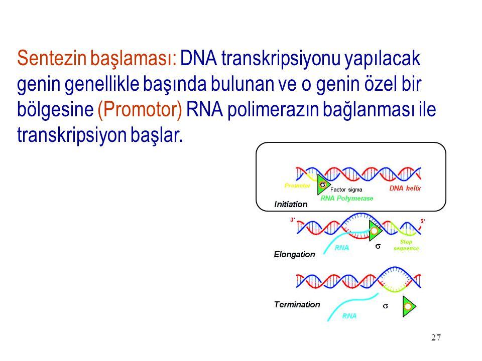 Sentezin başlaması: DNA transkripsiyonu yapılacak genin genellikle başında bulunan ve o genin özel bir bölgesine (Promotor) RNA polimerazın bağlanması ile transkripsiyon başlar.