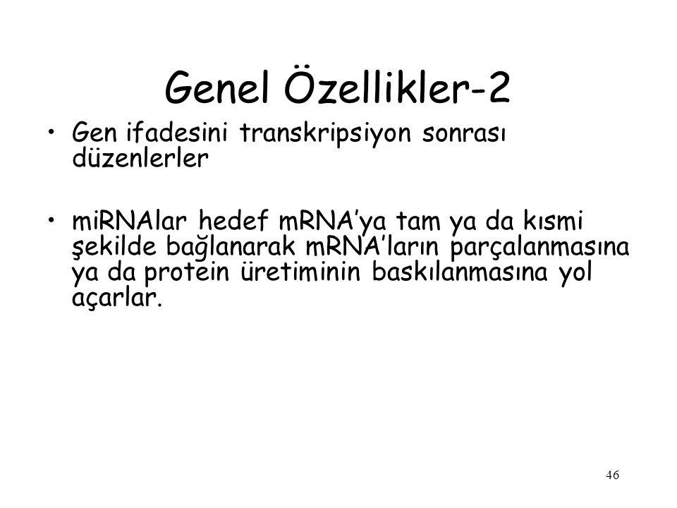 Genel Özellikler-2 Gen ifadesini transkripsiyon sonrası düzenlerler