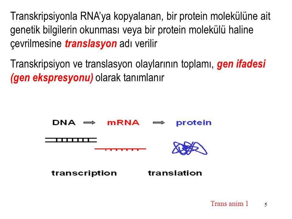 Transkripsiyonla RNA'ya kopyalanan, bir protein molekülüne ait genetik bilgilerin okunması veya bir protein molekülü haline çevrilmesine translasyon adı verilir