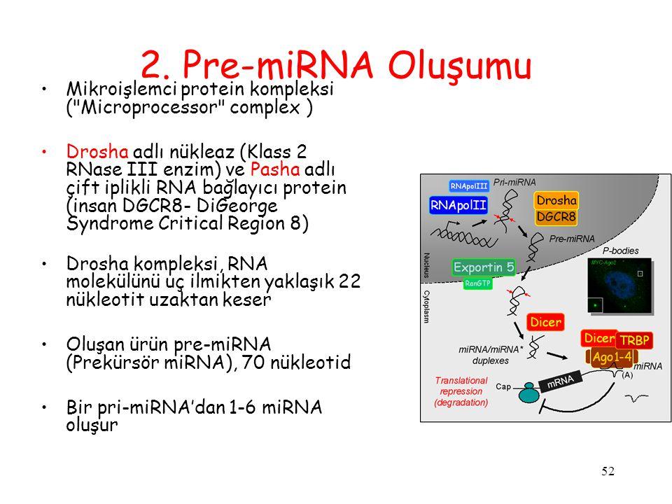 2. Pre-miRNA Oluşumu Mikroişlemci protein kompleksi ( Microprocessor complex )
