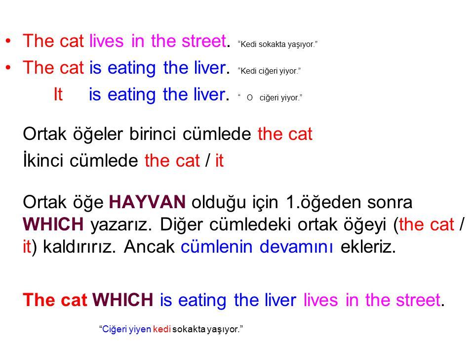 The cat lives in the street. Kedi sokakta yaşıyor.