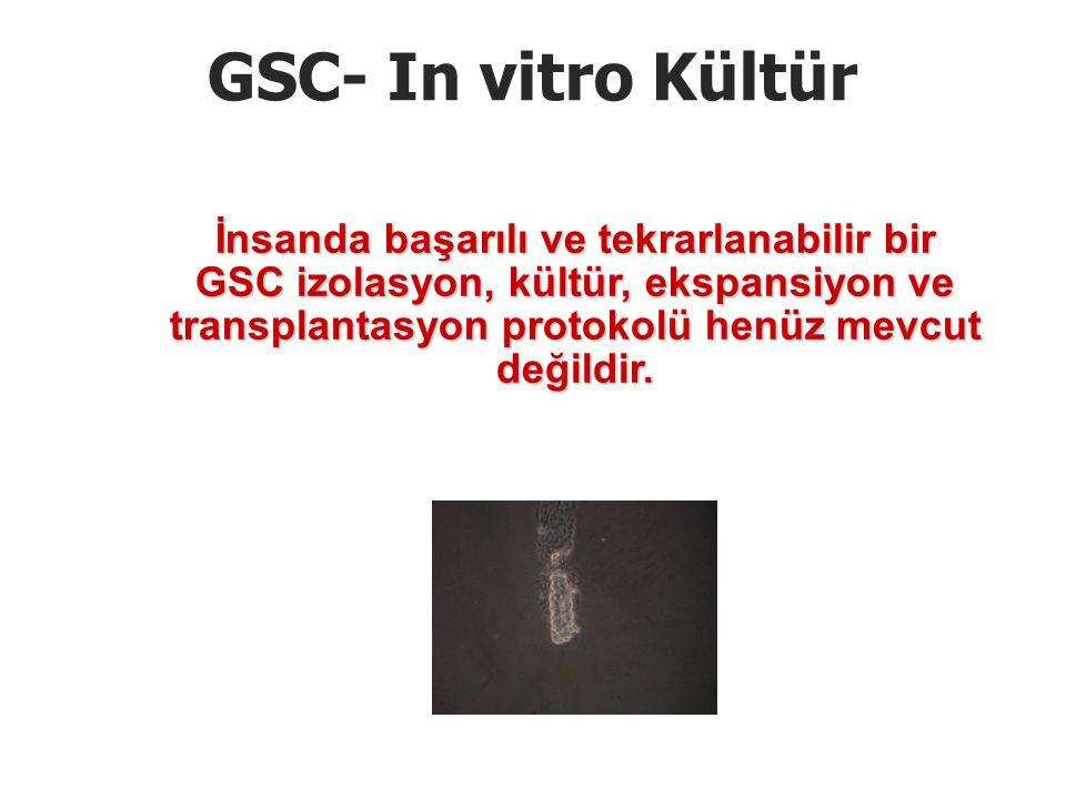 GSC- In vitro Kültür İnsanda başarılı ve tekrarlanabilir bir GSC izolasyon, kültür, ekspansiyon ve transplantasyon protokolü henüz mevcut değildir.