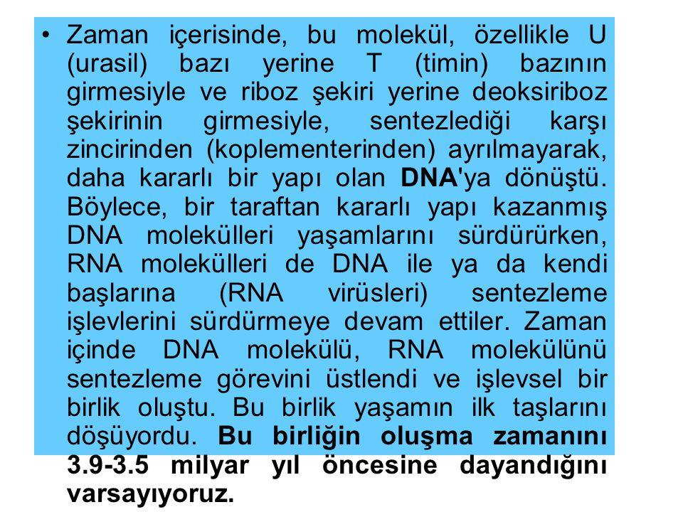 Zaman içerisinde, bu molekül, özellikle U (urasil) bazı yerine T (timin) bazının girmesiyle ve riboz şekiri yerine deoksiriboz şekirinin girmesiyle, sentezlediği karşı zincirinden (koplementerinden) ayrılmayarak, daha kararlı bir yapı olan DNA ya dönüştü.