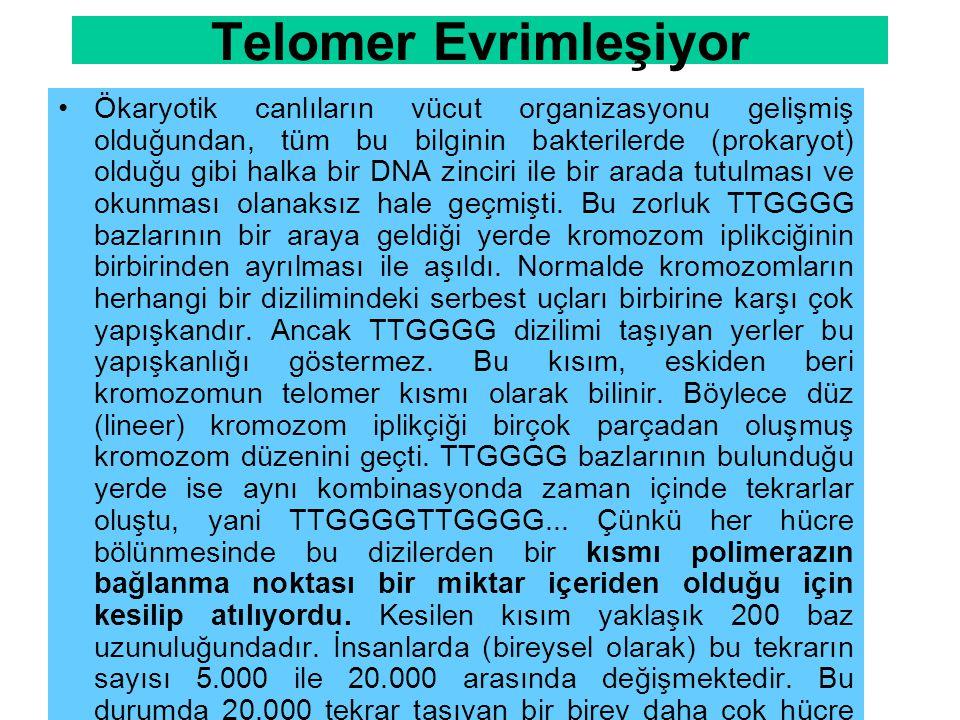 Telomer Evrimleşiyor