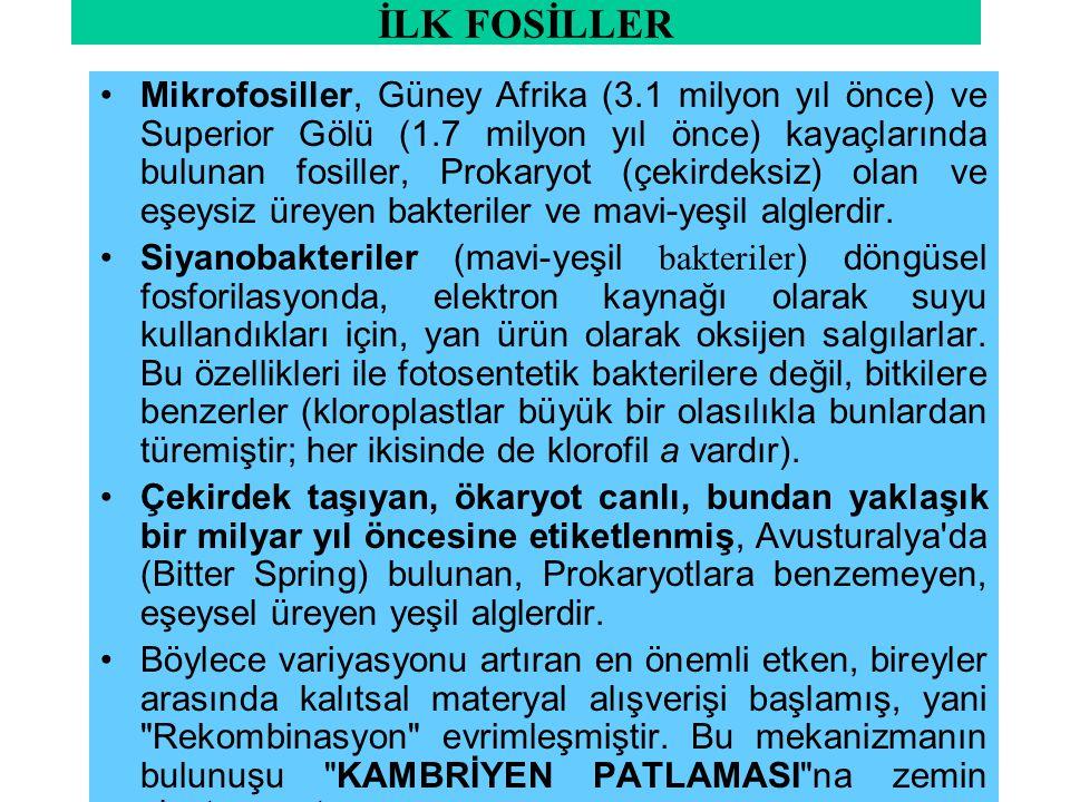 İLK FOSİLLER