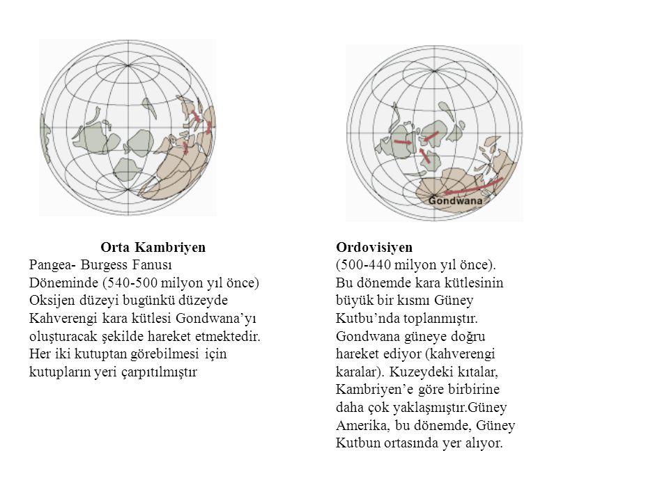 Orta Kambriyen Pangea- Burgess Fanusı. Döneminde (540-500 milyon yıl önce) Oksijen düzeyi bugünkü düzeyde.