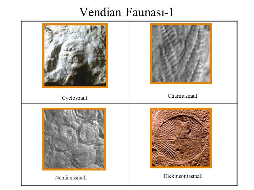 Vendian Faunası-1 Charniasmall Cyclosmall Dickinsoniasmall