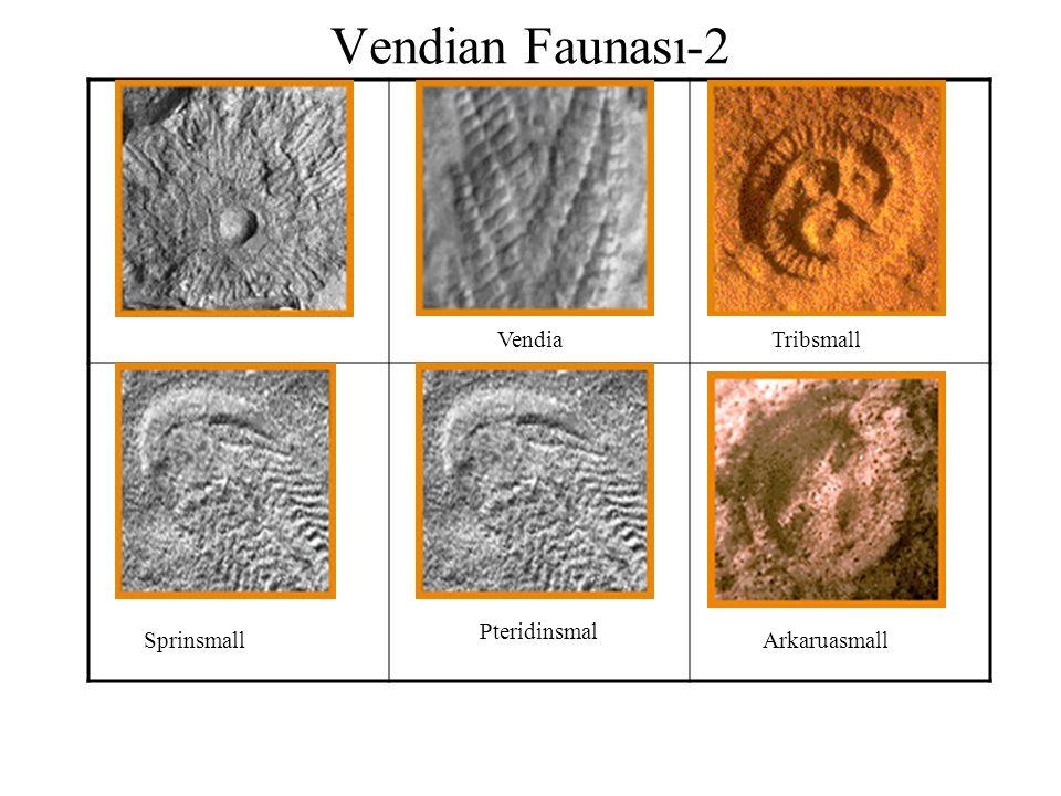 Vendian Faunası-2 Vendia Tribsmall Pteridinsmal Sprinsmall