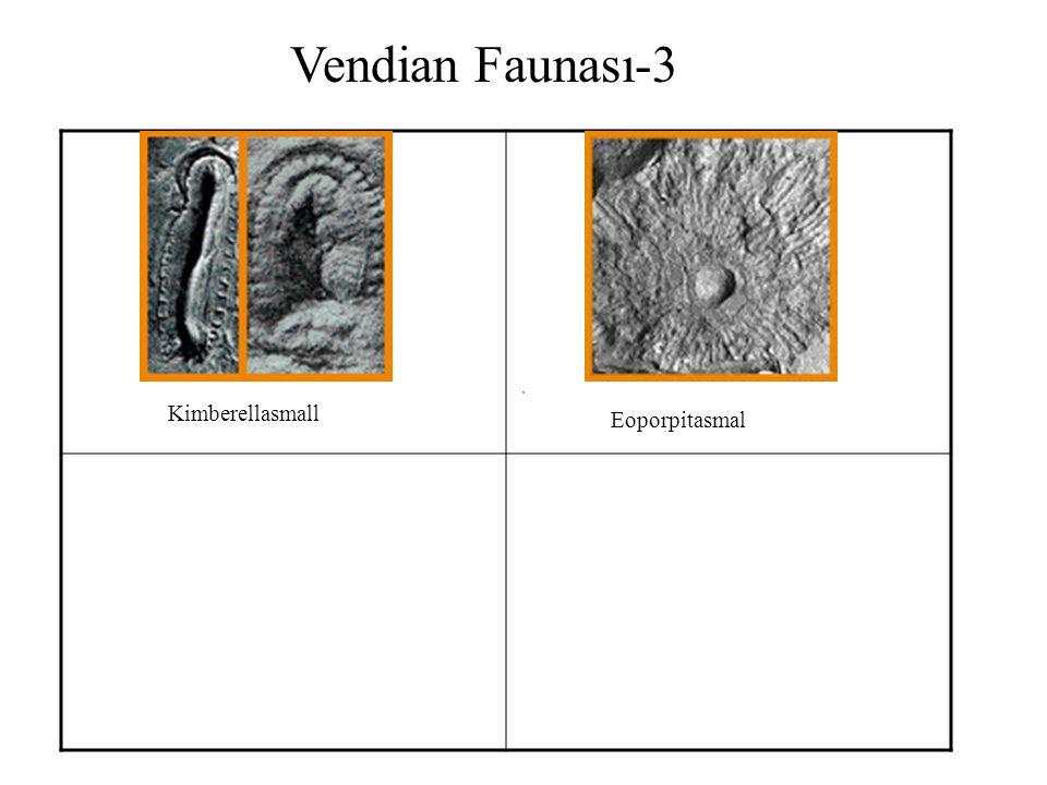 Vendian Faunası-3 Kimberellasmall Eoporpitasmal