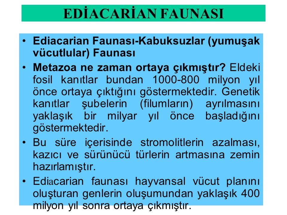 EDİACARİAN FAUNASI Ediacarian Faunası-Kabuksuzlar (yumuşak vücutlular) Faunası.