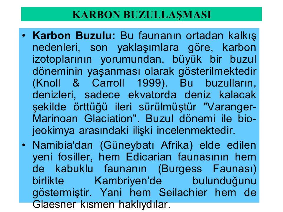 KARBON BUZULLAŞMASI