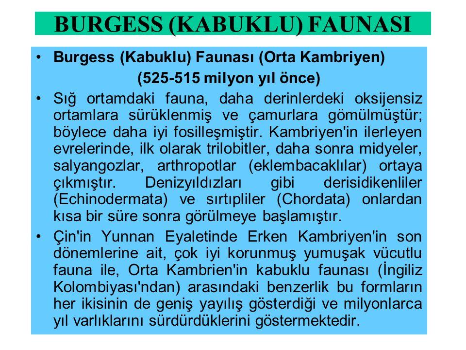 BURGESS (KABUKLU) FAUNASI