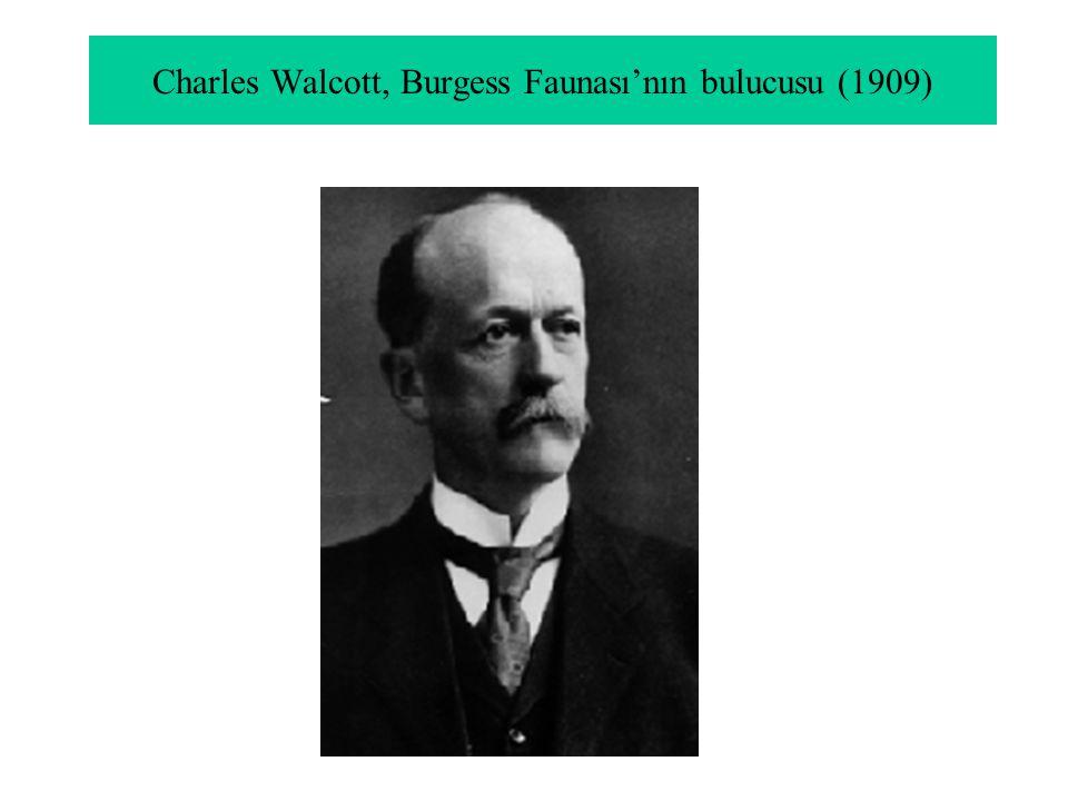 Charles Walcott, Burgess Faunası'nın bulucusu (1909)