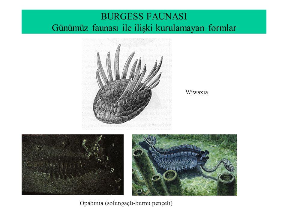 BURGESS FAUNASI Günümüz faunası ile ilişki kurulamayan formlar
