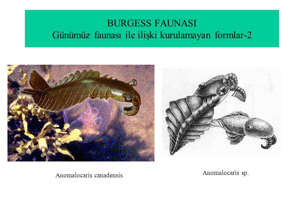 BURGESS FAUNASI Günümüz faunası ile ilişki kurulamayan formlar-2