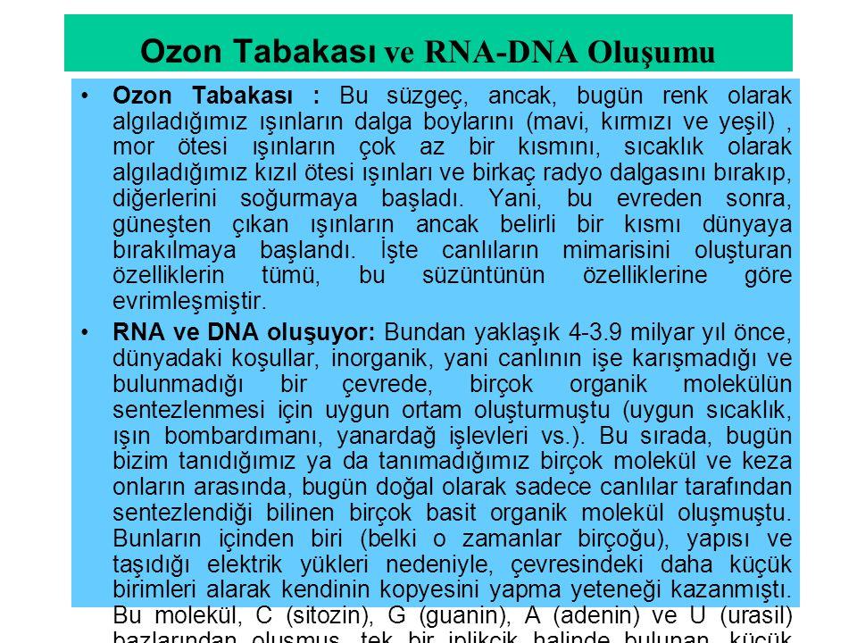 Ozon Tabakası ve RNA-DNA Oluşumu