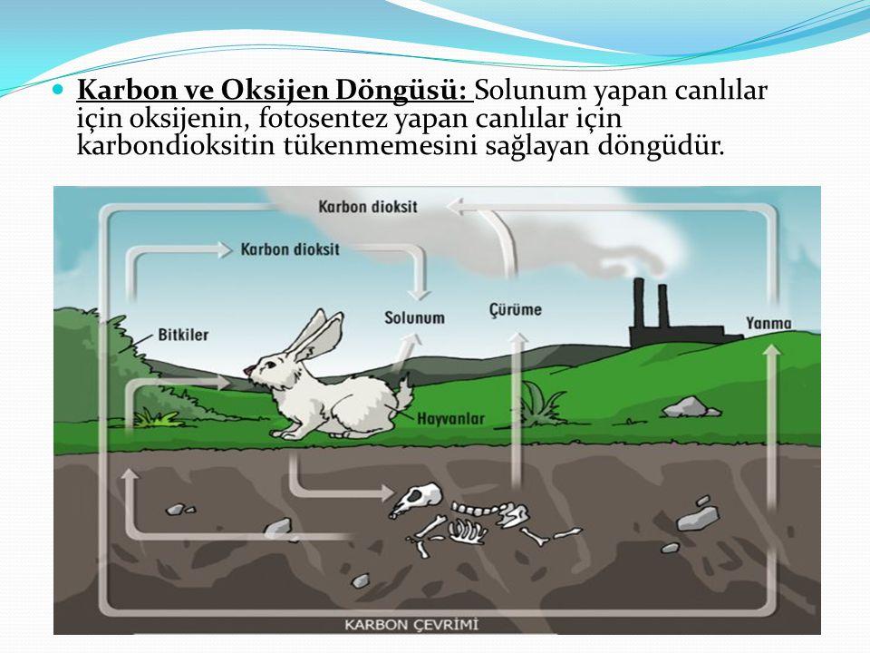 Karbon ve Oksijen Döngüsü: Solunum yapan canlılar için oksijenin, fotosentez yapan canlılar için karbondioksitin tükenmemesini sağlayan döngüdür.