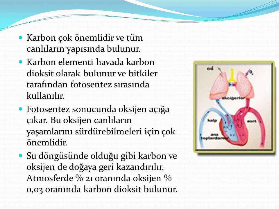 Karbon çok önemlidir ve tüm canlıların yapısında bulunur.
