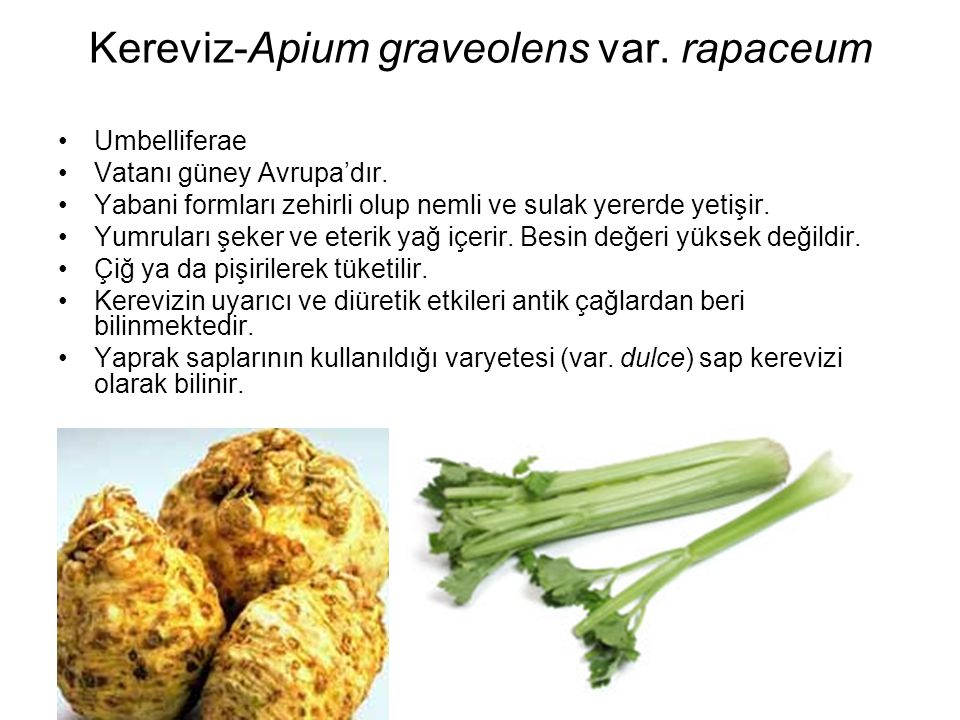 Kereviz-Apium graveolens var. rapaceum