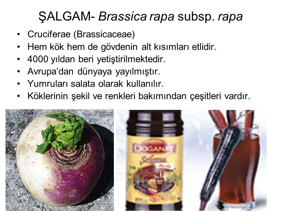 ŞALGAM- Brassica rapa subsp. rapa