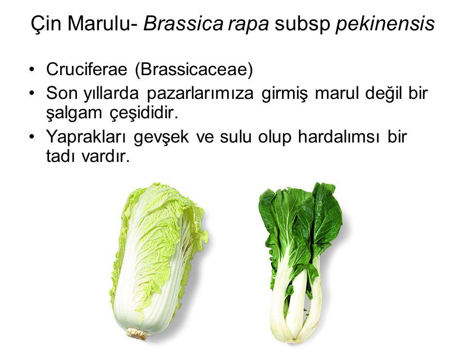 Çin Marulu- Brassica rapa subsp pekinensis