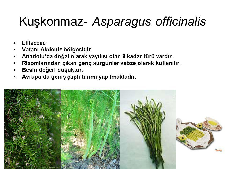 Kuşkonmaz- Asparagus officinalis