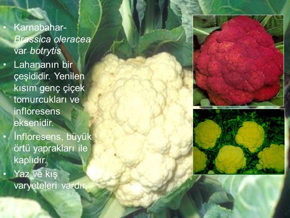 Karnabahar- Brassica oleracea var botrytis