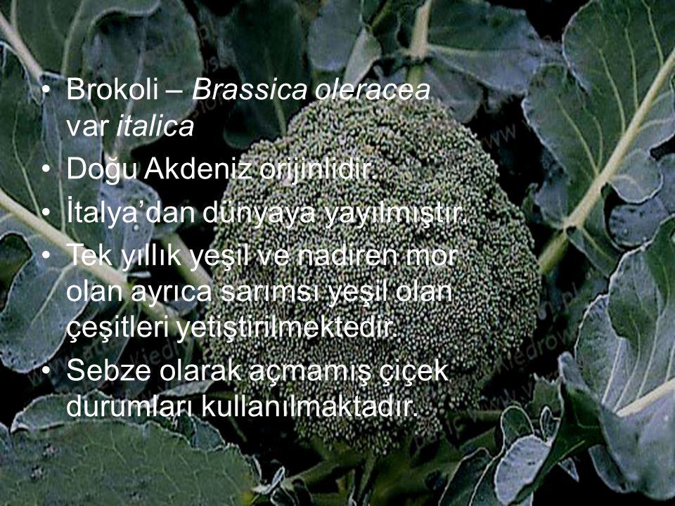 Brokoli – Brassica oleracea var italica