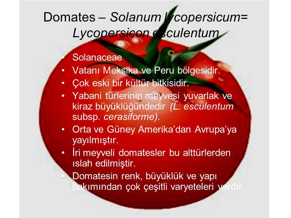 Domates – Solanum lycopersicum= Lycopersicon esculentum