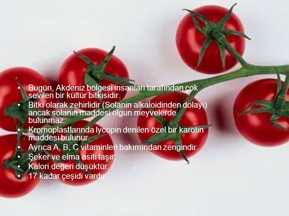 Bugün, Akdeniz bölgesi insanları tarafından çok sevilen bir kültür bitkisidir.