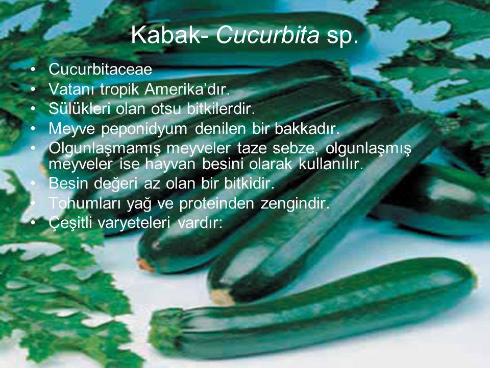 Kabak- Cucurbita sp. Cucurbitaceae Vatanı tropik Amerika'dır.