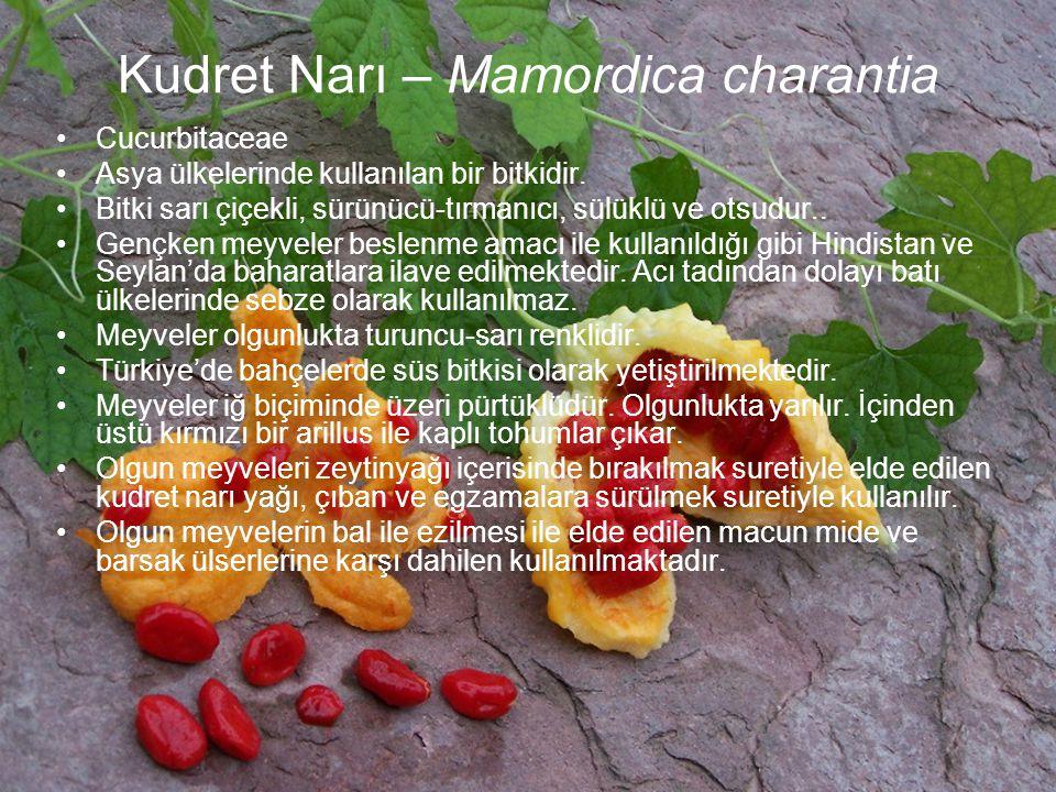Kudret Narı – Mamordica charantia
