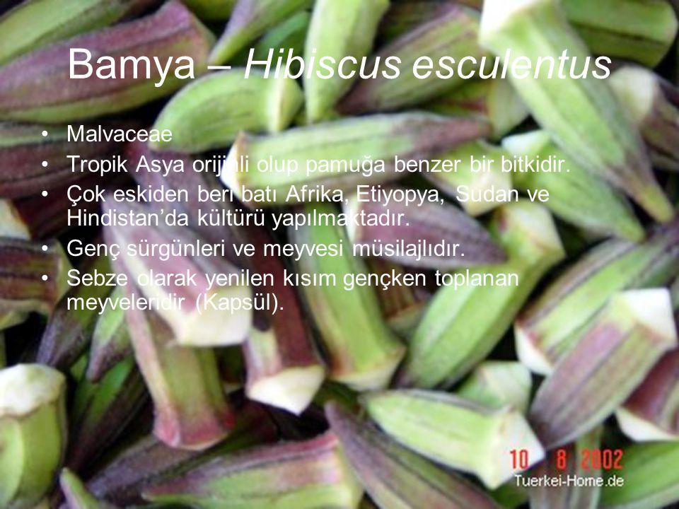 Bamya – Hibiscus esculentus